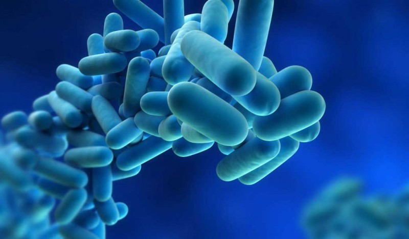 Bacterias-Gram-negativas